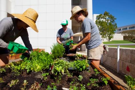 Installing the Getty Salad Garden. Photo: Abby Han