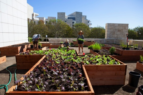The Getty Salad Garden in progress next to the Central Garden. Photo: Abby Han