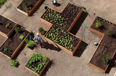 Overhead view of the Getty Salad Garden. Photo: Abby Han